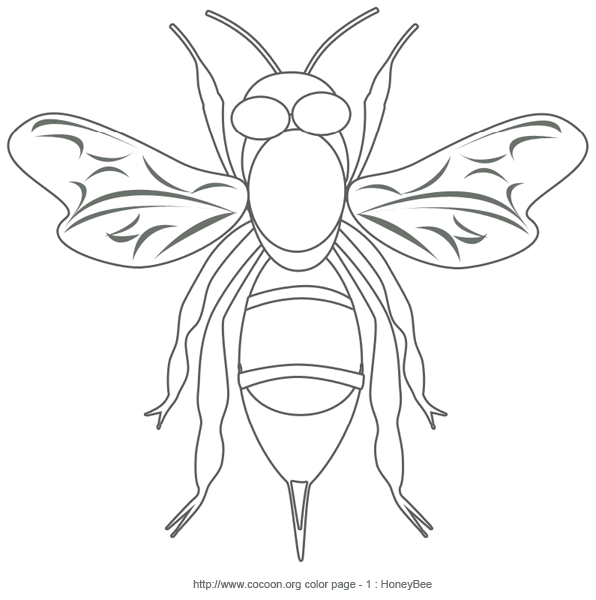 Super Honey Bee – Print and Color | Cocoon Articles and Butterfly Life Cycle OV22